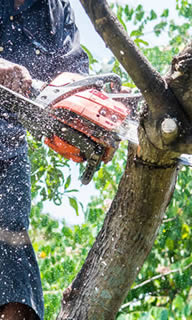 Clearwater FL Tree Services
