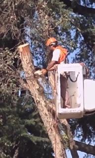Prime-Scape Tree Trimming
