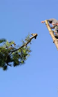 Tree Removal in Dunedin FL