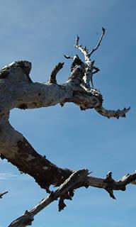Tree Removal in Dunedin FL