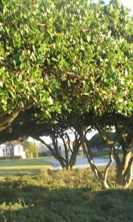 Palm Harbor FL Tree Pruning