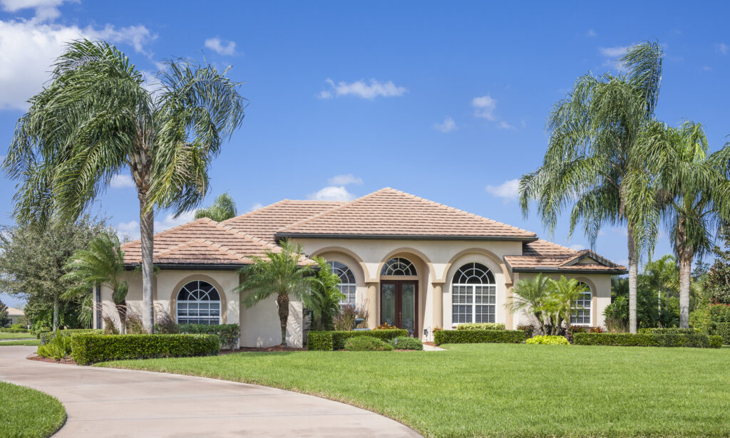 The Importance Of Palm Tree Maintenance Prime Scape Services