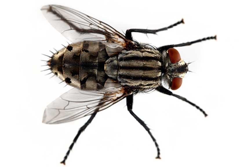 Pest Control Dunedin