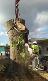 How to Remove a Tree Seminole FL