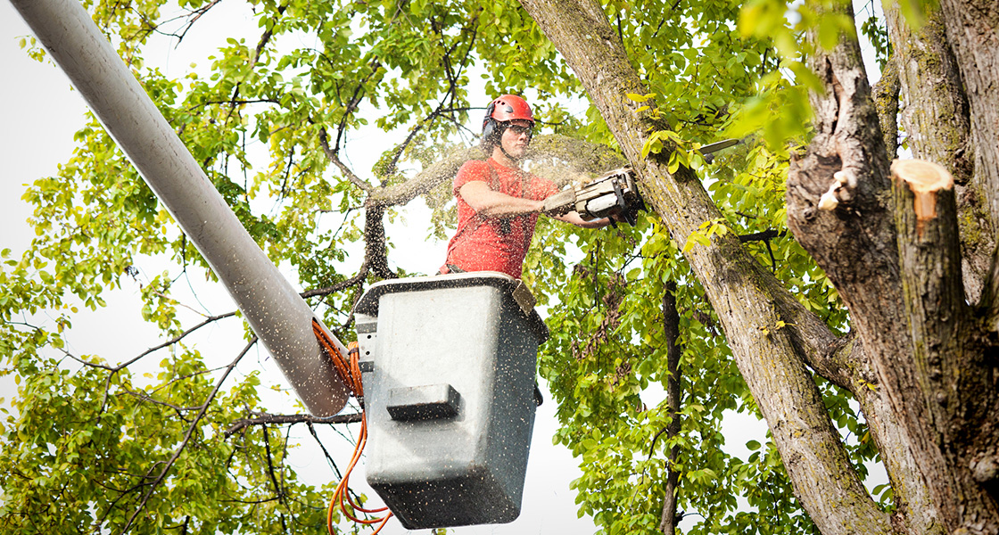 Tree Pruning Company