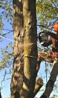 Primescape Tree Removal