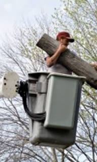 Tree Removal Service Palm Harbor FL