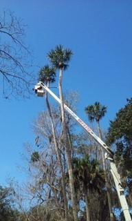Tampa-FL-Tree Removal-Service
