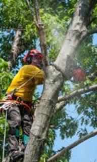 Tree Removal in Palm Harbor-FL