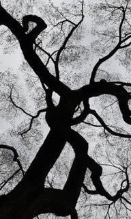 Seminole Tree Removal Services