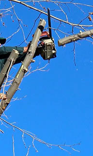 Tree Trimming Service Palm Harbor FL