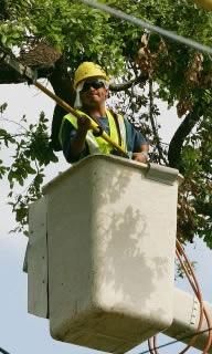 Tree Services Dunedin FL