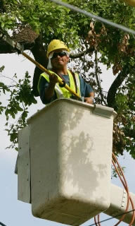Prime-scape Tree Trimming Service